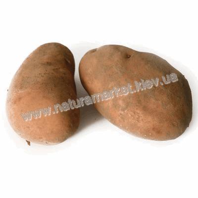 Купить картофель в Киеве