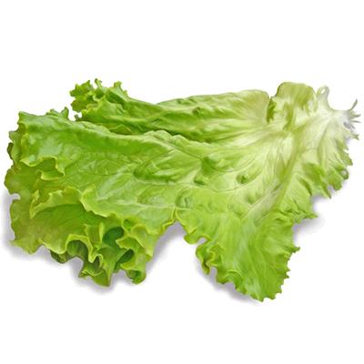 Купить листья салата в Киеве