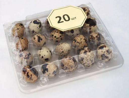 Яйца перепелиные, уп 20 шт